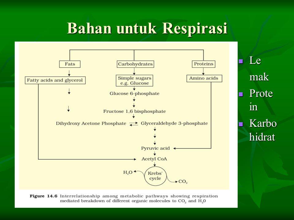 Bahan untuk Respirasi Le Le mak mak Prote in Prote in Karbo hidrat Karbo hidrat