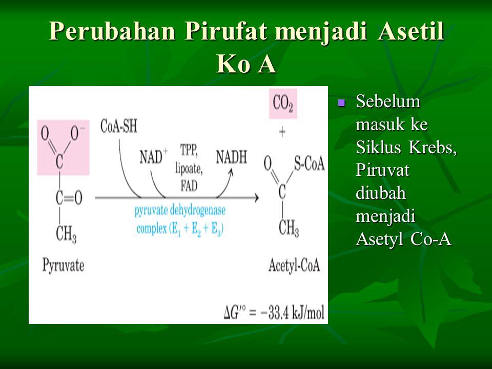 Perubahan Pirufat menjadi Asetil Ko A Sebelum masuk ke Siklus Krebs, Piruvat diubah menjadi Asetyl Co-A Sebelum masuk ke Siklus Krebs, Piruvat diubah