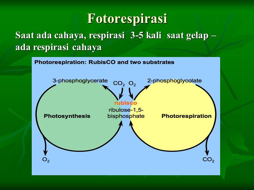 Fotorespirasi Saat ada cahaya, respirasi 3-5 kali saat gelap – ada respirasi cahaya