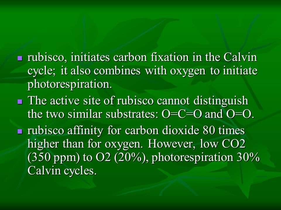 rubisco, initiates carbon fixation in the Calvin cycle; it also combines with oxygen to initiate photorespiration. rubisco, initiates carbon fixation