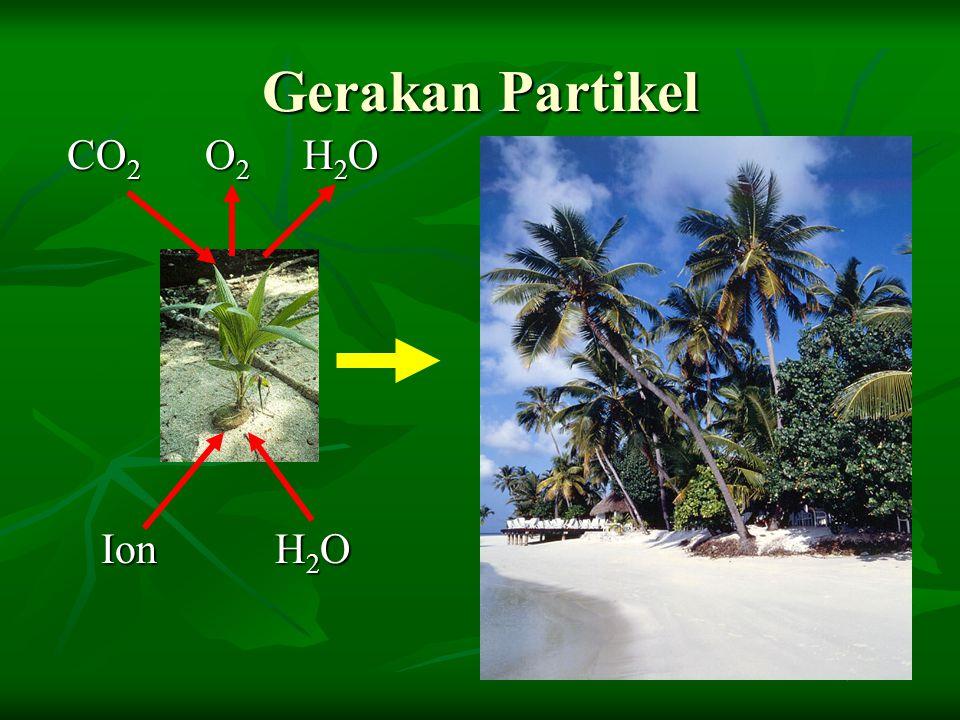 Gerakan Partikel CO 2 O 2 H 2 O CO 2 O 2 H 2 O Ion H 2 O Ion H 2 O