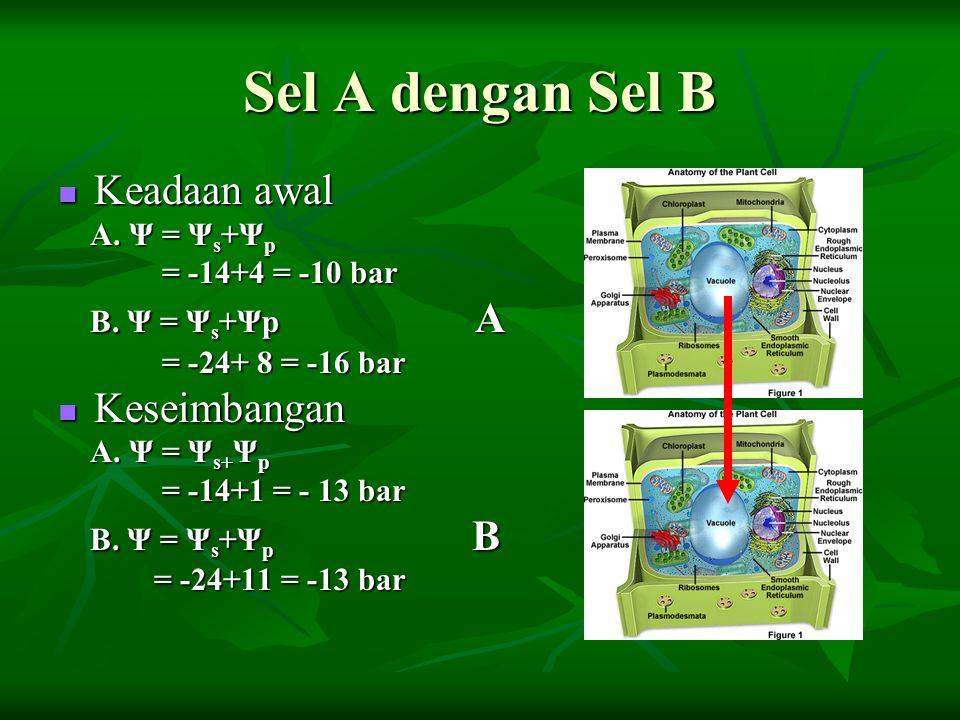 Sel A dengan Sel B Keadaan awal Keadaan awal A. Ψ = Ψ s +Ψ p A. Ψ = Ψ s +Ψ p = -14+4 = -10 bar = -14+4 = -10 bar B. Ψ = Ψ s +Ψp A B. Ψ = Ψ s +Ψp A = -