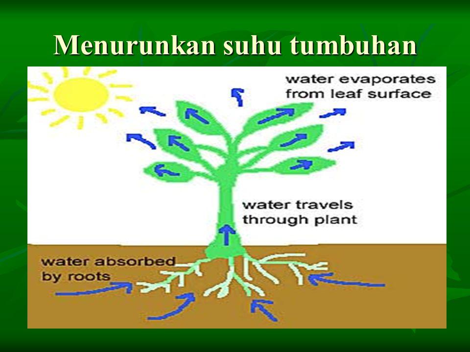 Menurunkan suhu tumbuhan