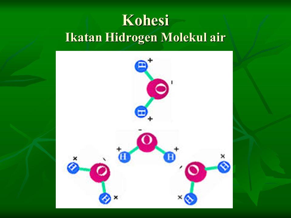 Kohesi Ikatan Hidrogen Molekul air