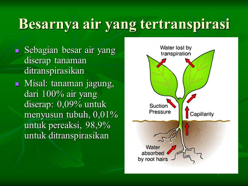 Besarnya air yang tertranspirasi Sebagian besar air yang diserap tanaman ditranspirasikan Sebagian besar air yang diserap tanaman ditranspirasikan Mis