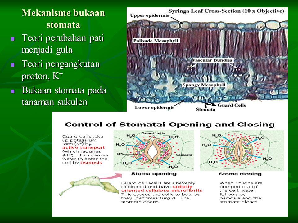 Mekanisme bukaan stomata Teori perubahan pati menjadi gula Teori perubahan pati menjadi gula Teori pengangkutan proton, K + Teori pengangkutan proton,