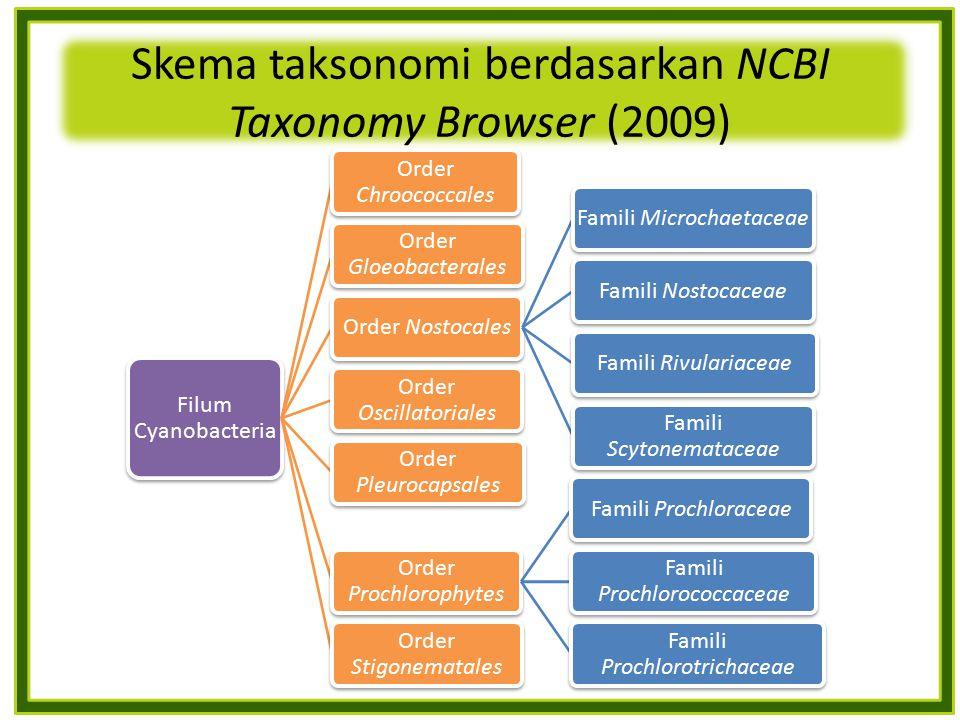 Skema taksonomi berdasarkan NCBI Taxonomy Browser (2009) Filum Cyanobacteria Order Chroococcales Order Gloeobacterales Order NostocalesFamili Microcha