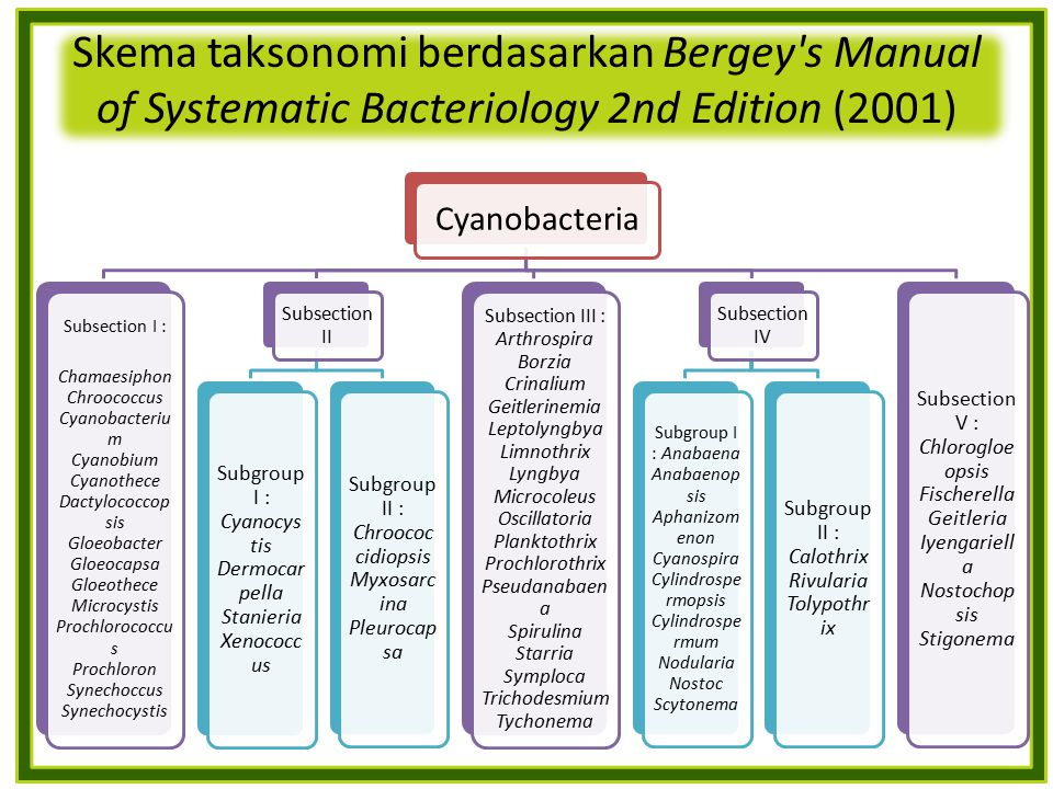 Skema taksonomi berdasarkan Bergey's Manual of Systematic Bacteriology 2nd Edition (2001) Cyanobacteria Subsection I : Chamaesiphon Chroococcus Cyanob