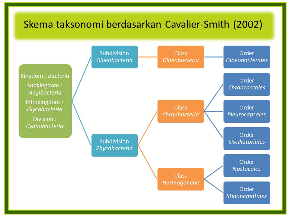 Skema taksonomi berdasarkan Cavalier-Smith (2002) Kingdom : Bacteria Subkingdom : Negibacteria Infrakingdom : Glycobacteria Division : Cyanobacteria Subdivision Gloeobacteria Class Gloeobacteria Order Gloeobacterales Subdivision Phycobacteria Class Chroobacteria Order Chroococcales Order Pleurocapsales Order Oscillatoriales Class Hormogoneae Order Nostocales Order Stigonematales
