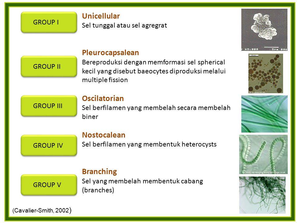 Unicellular Sel tunggal atau sel agregrat Pleurocapsalean Bereproduksi dengan memformasi sel spherical kecil yang disebut baeocytes diproduksi melalui