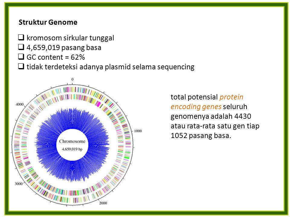 Struktur Genome  kromosom sirkular tunggal  4,659,019 pasang basa  GC content = 62%  tidak terdeteksi adanya plasmid selama sequencing total potensial protein encoding genes seluruh genomenya adalah 4430 atau rata-rata satu gen tiap 1052 pasang basa.