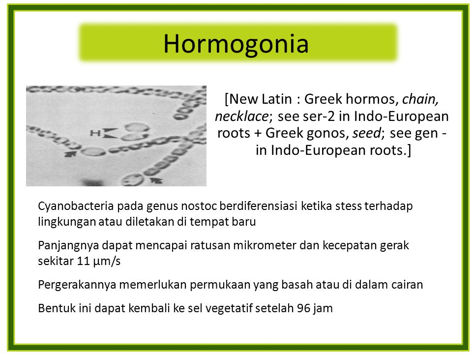 [New Latin : Greek hormos, chain, necklace; see ser-2 in Indo-European roots + Greek gonos, seed; see gen - in Indo-European roots.] Cyanobacteria pad