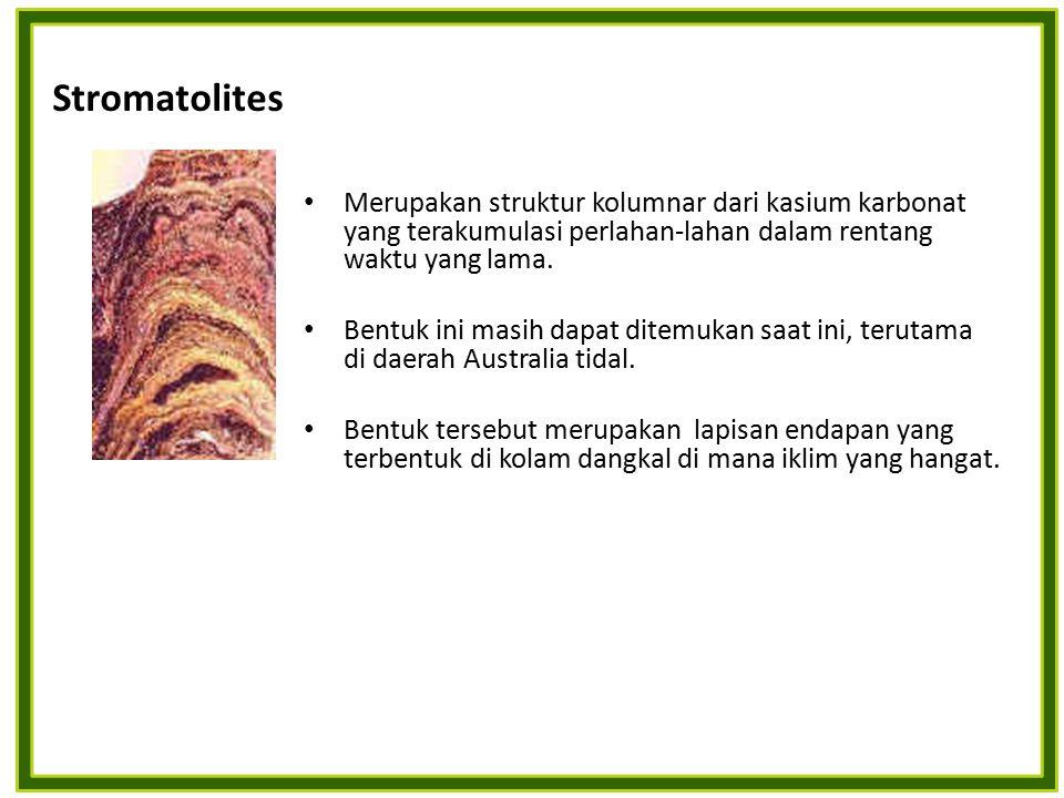 Merupakan struktur kolumnar dari kasium karbonat yang terakumulasi perlahan-lahan dalam rentang waktu yang lama. Bentuk ini masih dapat ditemukan saat