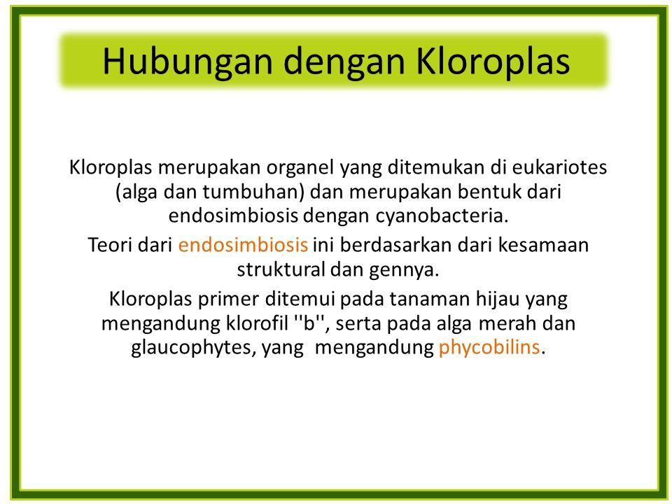 Kloroplas merupakan organel yang ditemukan di eukariotes (alga dan tumbuhan) dan merupakan bentuk dari endosimbiosis dengan cyanobacteria.