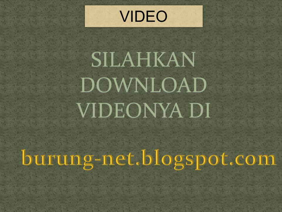 VIDEO SILAHKAN DOWNLOAD VIDEONYA DI