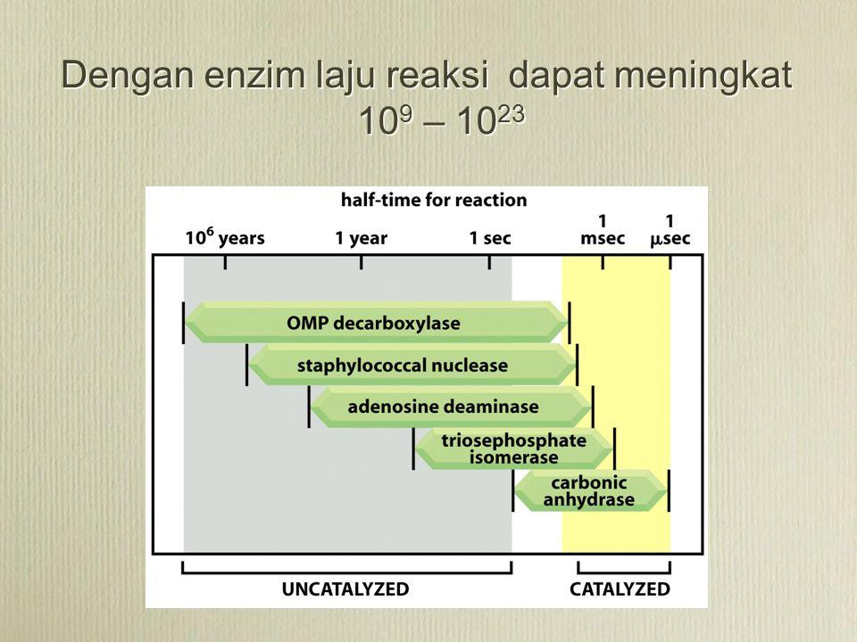 Dengan enzim laju reaksi dapat meningkat 10 9 – 10 23