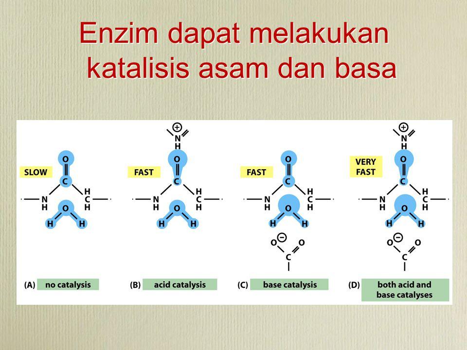 Enzim dapat melakukan katalisis asam dan basa