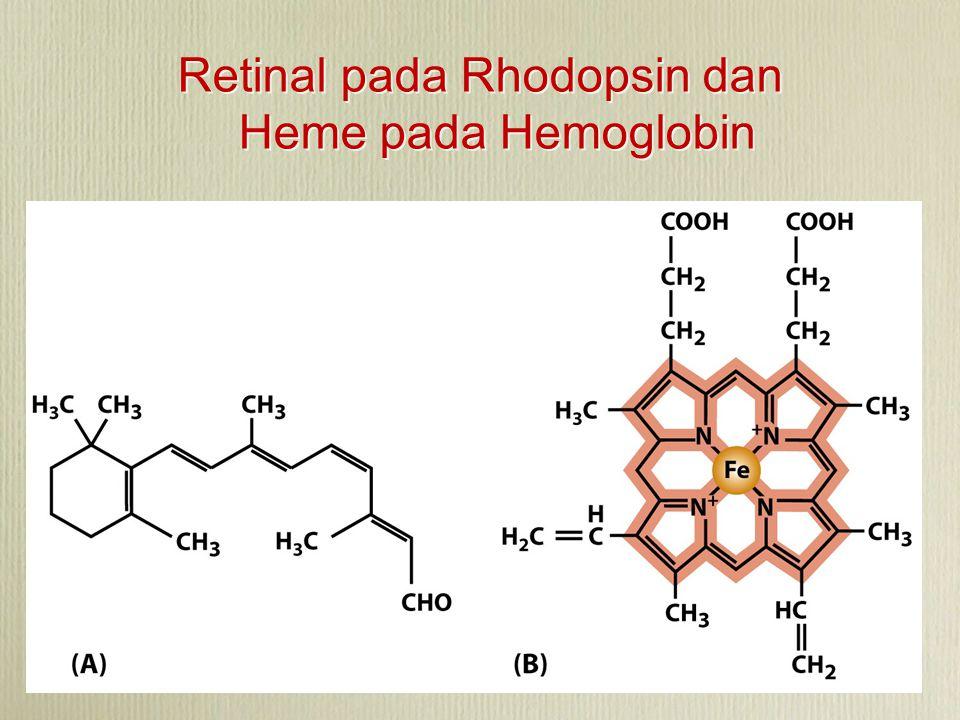 Retinal pada Rhodopsin dan Heme pada Hemoglobin