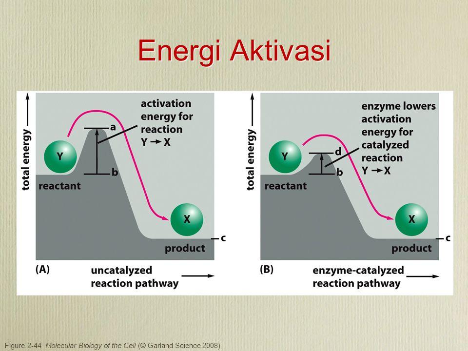 Kecocokan antara enzim dan substrat harus tepat.