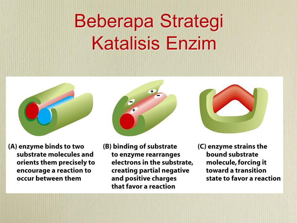 Beberapa Strategi Katalisis Enzim