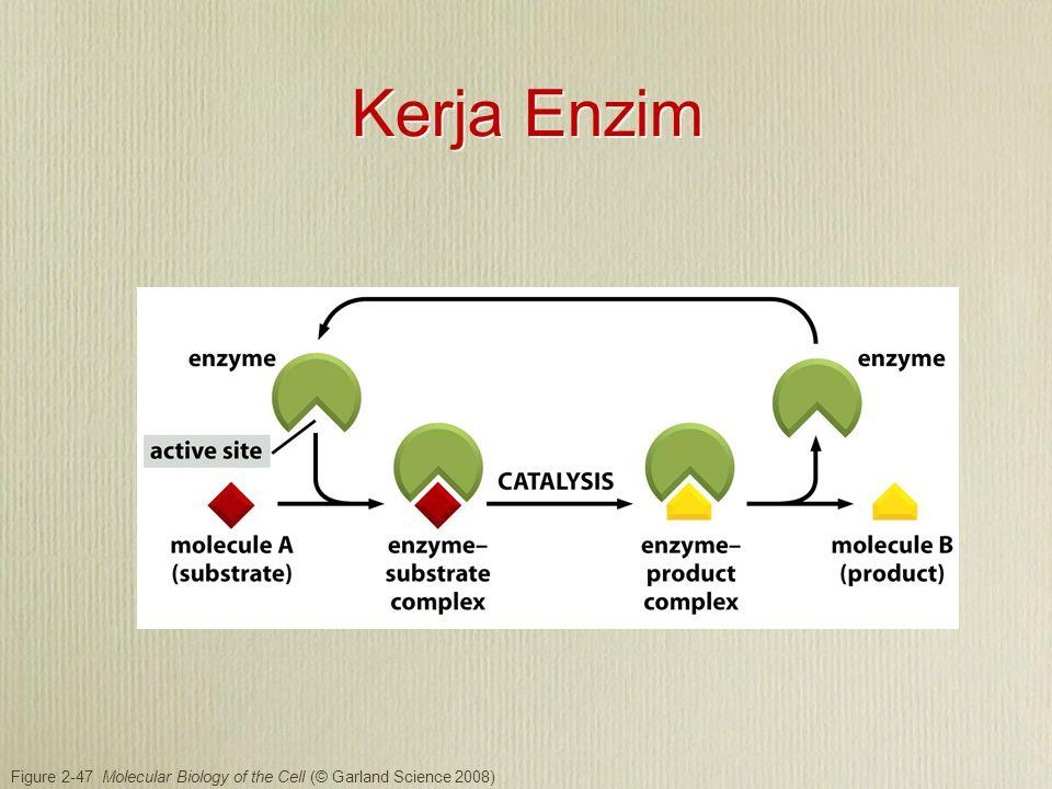 Figure 2-53 Molecular Biology of the Cell (© Garland Science 2008) Enzim tidak merubah kesetimbangan reaksi