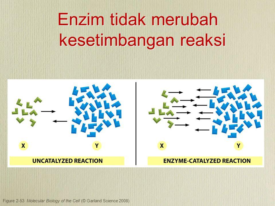 Enzim meningkatkan konsentrasi molekul substrat pada pusat aktif dan mengikat atom-atom dengan orientasi yang tepat agar dapat terjadi reaksi Energi ikat dapat juga berkontribusi pada reaksi Substrat mengalami perubahan geometri, distribusi elektron sebelum membentuk produk.