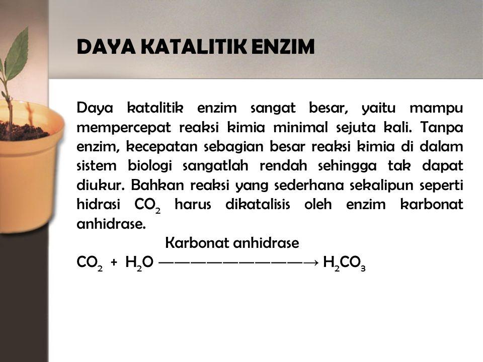 DAYA KATALITIK ENZIM Daya katalitik enzim sangat besar, yaitu mampu mempercepat reaksi kimia minimal sejuta kali.