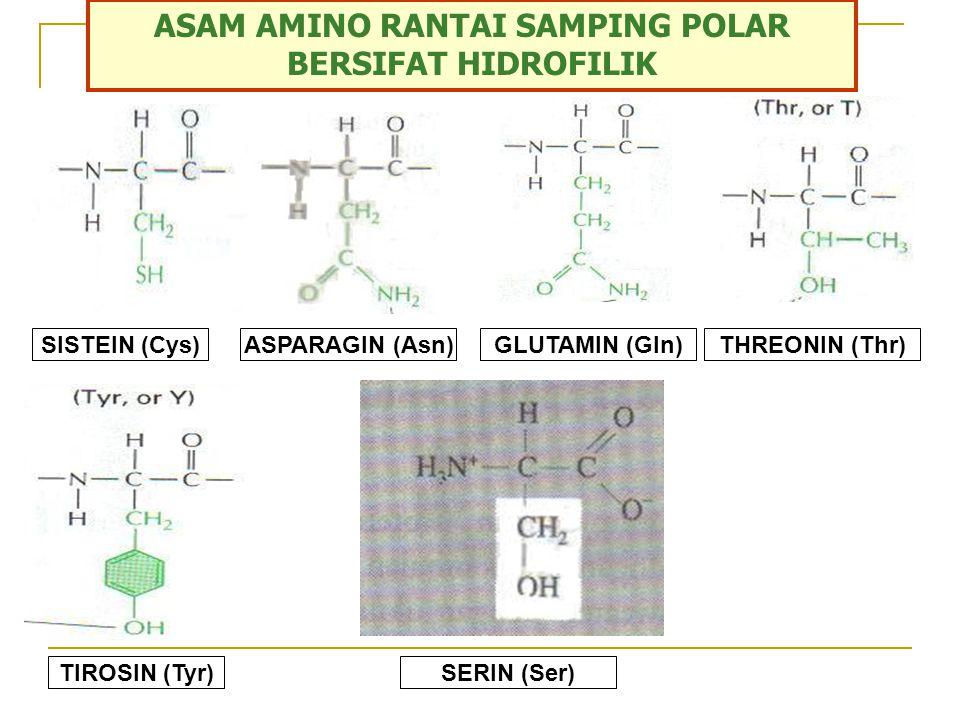 ASAM AMINO RANTAI SAMPING NON POLAR BERSIFAT HIDROFOBIK GLISIN (Gly)ALANIN (Ala)VALIN (Val)LEUSIN (Leu) METIONON (Met)TRIPTOPAN (Trp)PENILALANIN (Phe)PROLIN (Pro)