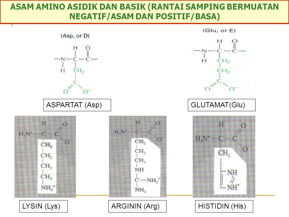 ASAM AMINO RANTAI SAMPING POLAR BERSIFAT HIDROFILIK SISTEIN (Cys)ASPARAGIN (Asn)GLUTAMIN (Gln)THREONIN (Thr) TIROSIN (Tyr)SERIN (Ser)