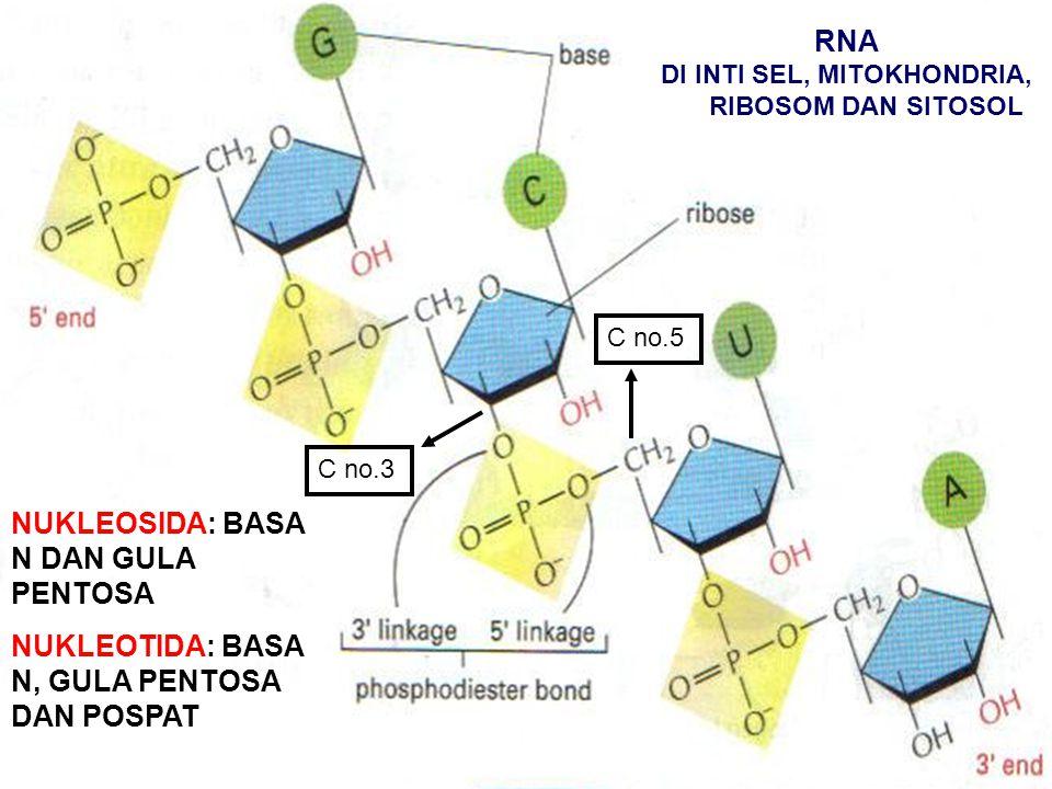 AS.NUKLEAT: DNA (DEOKSIRIBONUKLEAT) DAN RNA (RIBONUKLEAT).