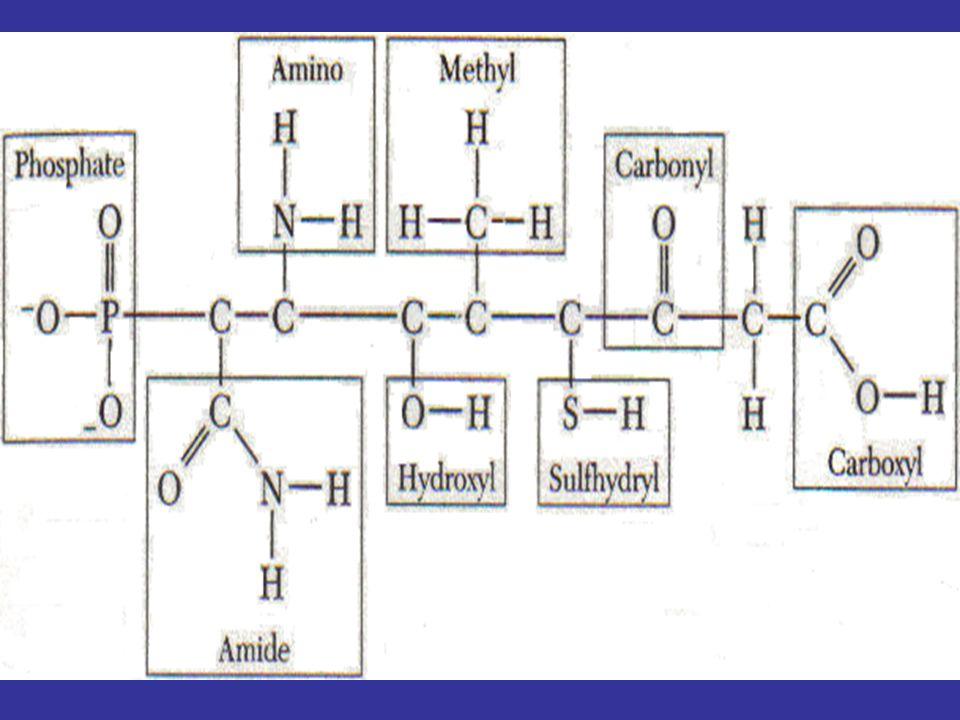 ATP AMP SIKLIK (cAMP) SEBAGAI MOLEKUL PENANDA DLM SEL (RESEPTOR)