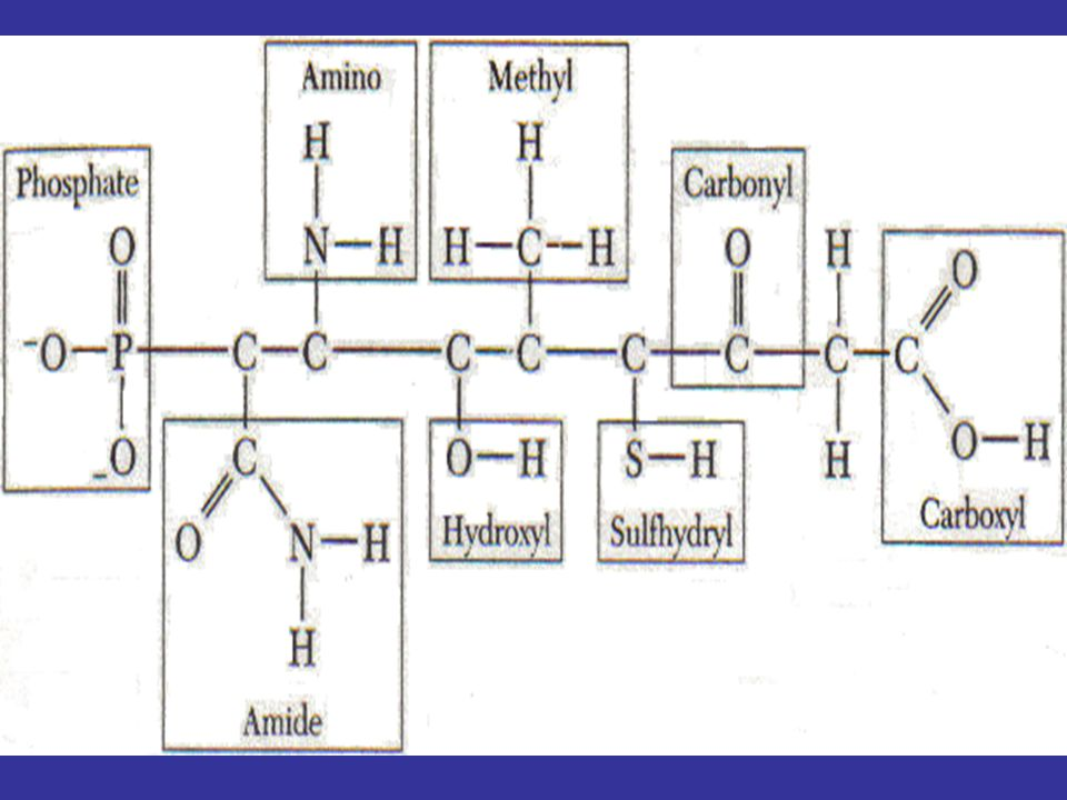 STRUKTUR PROTEIN PRIMER, SEKUNDER (HELIKS), TERSIER (GLOBULER) ATAU KUARTERNER (POLIGLOBULER) URUTAN ASAM AMINO STRUKTUR PRIMER STRUKTUR SEKUNDER ATAU α HELIKS KUMPARAN TAK BERATURAN LEMBARAN BERLIPAT ATAU
