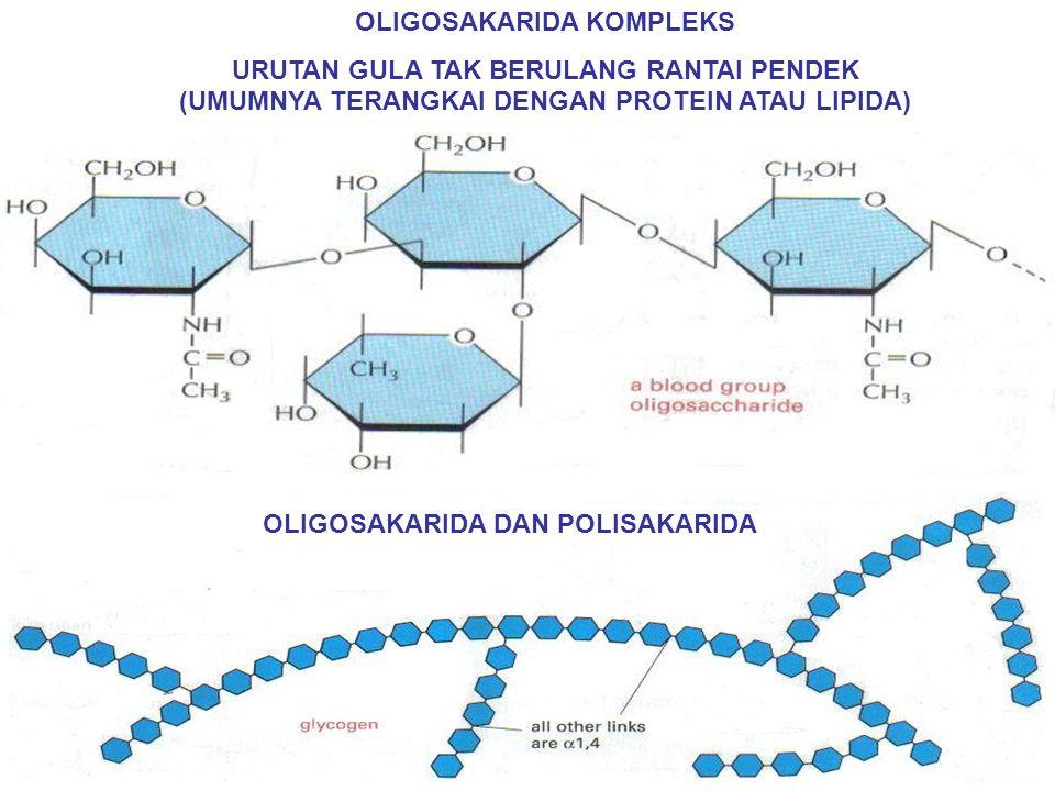 OLIGOSAKARIDA KOMPLEKS URUTAN GULA TAK BERULANG RANTAI PENDEK (UMUMNYA TERANGKAI DENGAN PROTEIN ATAU LIPIDA) OLIGOSAKARIDA DAN POLISAKARIDA