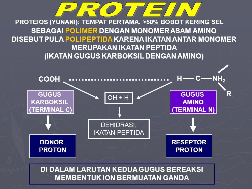 SEBAGAI POLIMER DENGAN MONOMER ASAM AMINO DISEBUT PULA POLIPEPTIDA KARENA IKATAN ANTAR MONOMER MERUPAKAN IKATAN PEPTIDA (IKATAN GUGUS KARBOKSIL DENGAN AMINO) GUGUS KARBOKSIL (TERMINAL C) COOH DONOR PROTON H C NH 2 R GUGUS AMINO (TERMINAL N) RESEPTOR PROTON DI DALAM LARUTAN KEDUA GUGUS BEREAKSI MEMBENTUK ION BERMUATAN GANDA PROTEIOS (YUNANI): TEMPAT PERTAMA, >50% BOBOT KERING SEL OH + H DEHIDRASI, IKATAN PEPTIDA