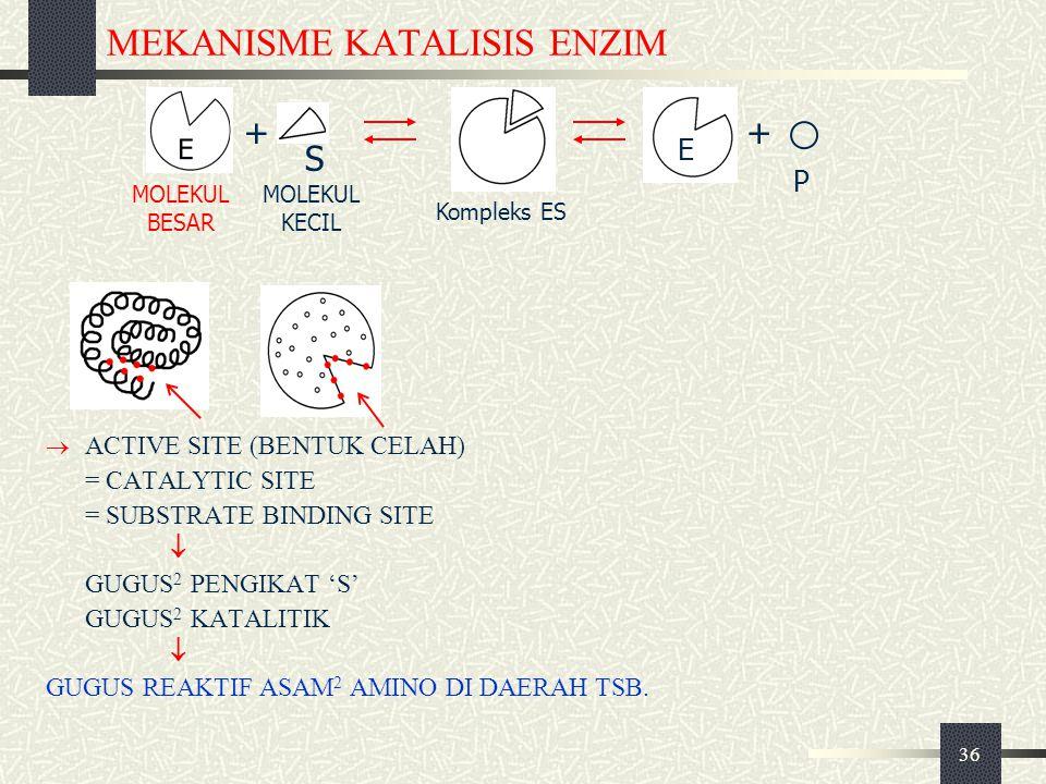 36 MEKANISME KATALISIS ENZIM  ACTIVE SITE (BENTUK CELAH) = CATALYTIC SITE = SUBSTRATE BINDING SITE  GUGUS 2 PENGIKAT 'S' GUGUS 2 KATALITIK  GUGUS R