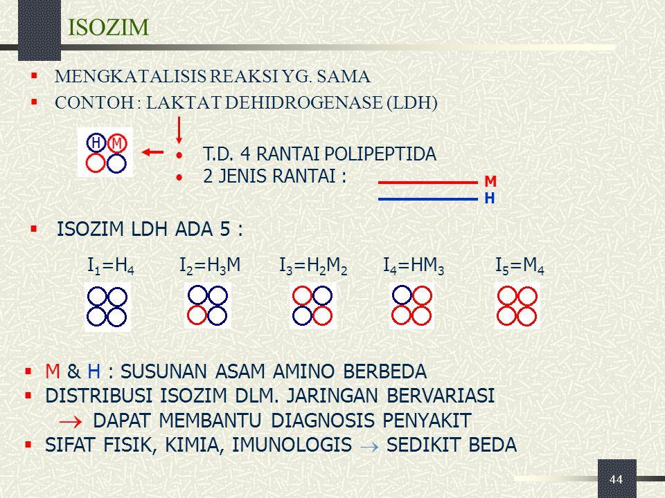 44 ISOZIM  MENGKATALISIS REAKSI YG. SAMA  CONTOH : LAKTAT DEHIDROGENASE (LDH)  M & H : SUSUNAN ASAM AMINO BERBEDA  DISTRIBUSI ISOZIM DLM. JARINGAN
