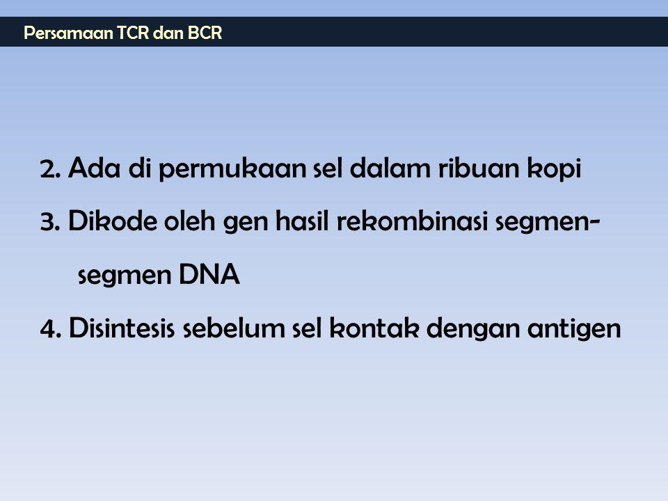 Persamaan TCR dan BCR 2. Ada di permukaan sel dalam ribuan kopi 3. Dikode oleh gen hasil rekombinasi segmen- segmen DNA 4. Disintesis sebelum sel kont