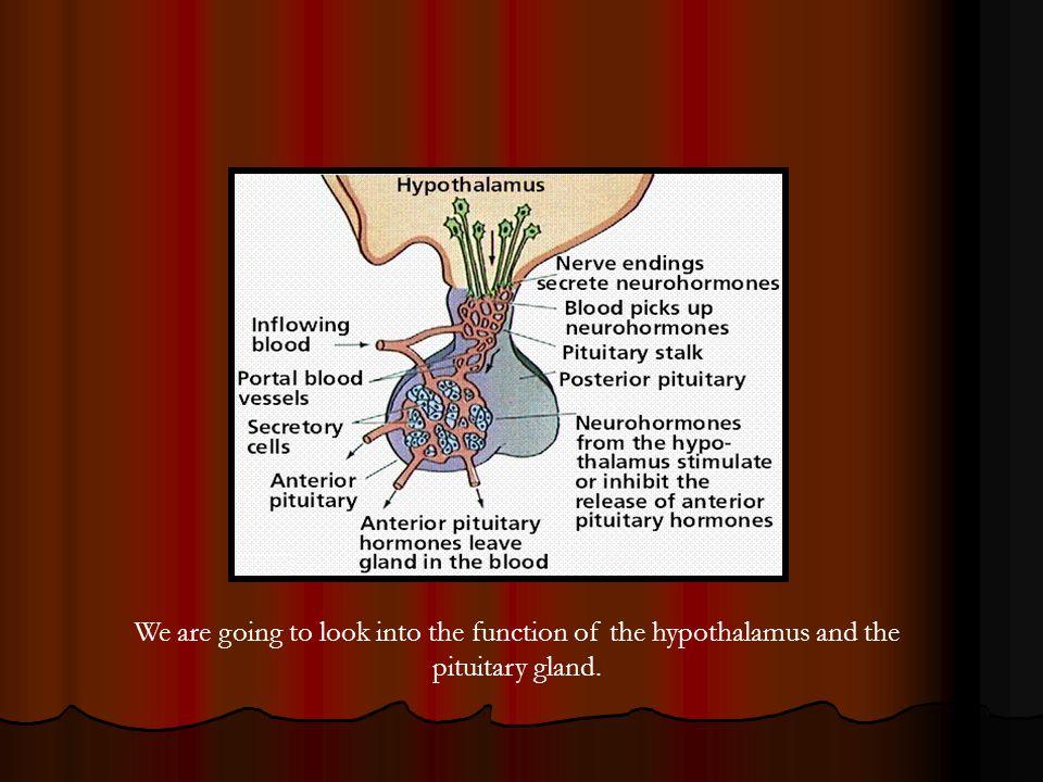 Reproductive System http://cvm.msu.edu/courses/AP/bessie/cowreproorgans3.jpg