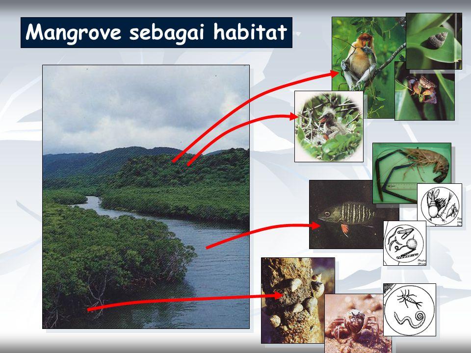 Mangrove sebagai habitat