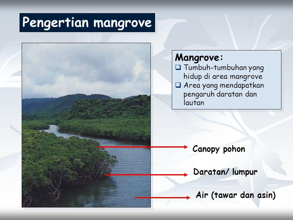 Pengertian mangrove Air (tawar dan asin) Daratan/ lumpur Canopy pohon Mangrove:  Tumbuh-tumbuhan yang hidup di area mangrove  Area yang mendapatkan