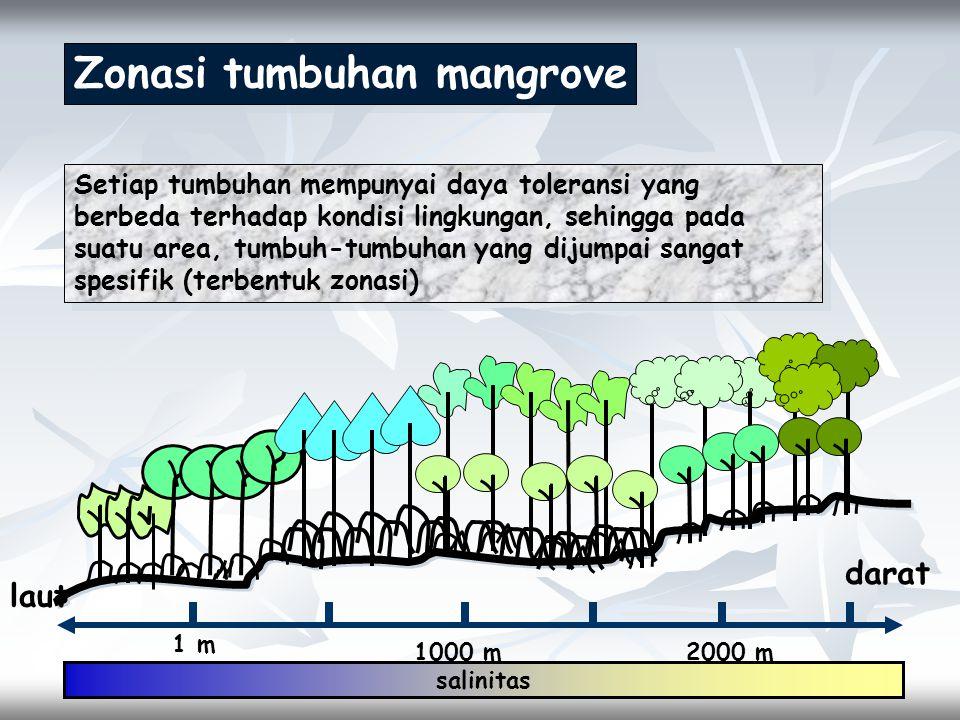 Zonasi tumbuhan mangrove Setiap tumbuhan mempunyai daya toleransi yang berbeda terhadap kondisi lingkungan, sehingga pada suatu area, tumbuh-tumbuhan