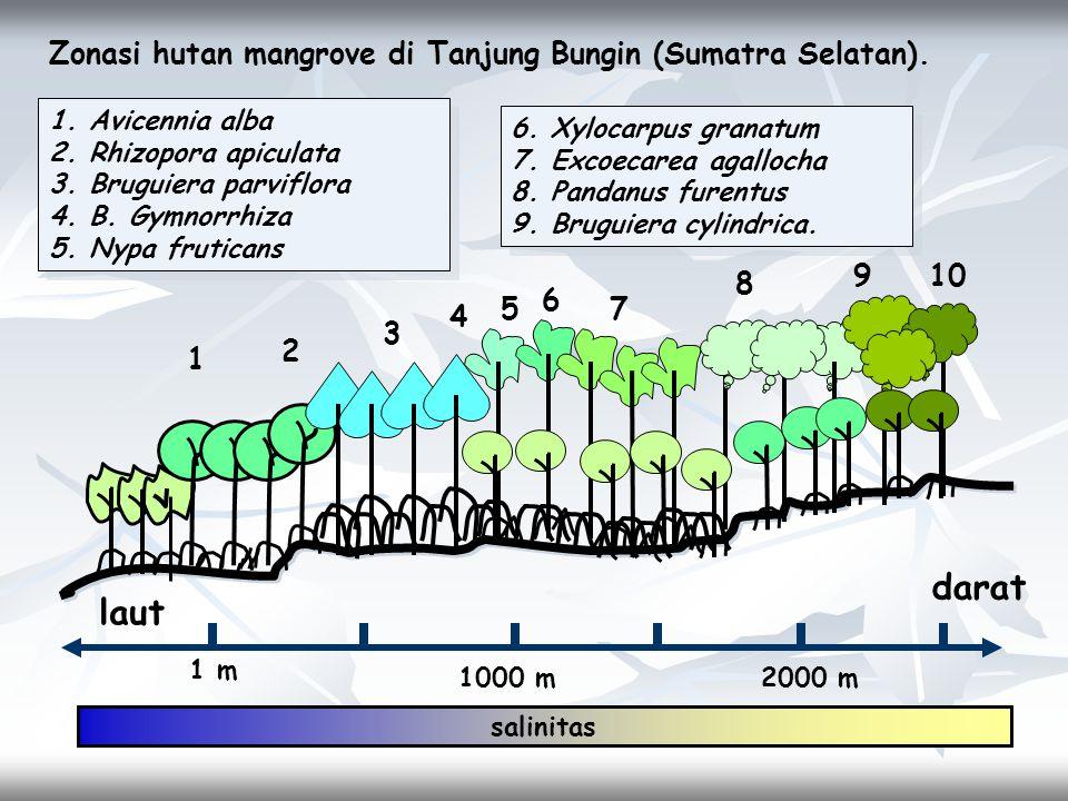1 m 1000 m2000 m laut darat 1 2 3 4 5 6 7 8 910 1.Avicennia alba 2.Rhizopora apiculata 3.Bruguiera parviflora 4.B. Gymnorrhiza 5.Nypa fruticans 1.Avic