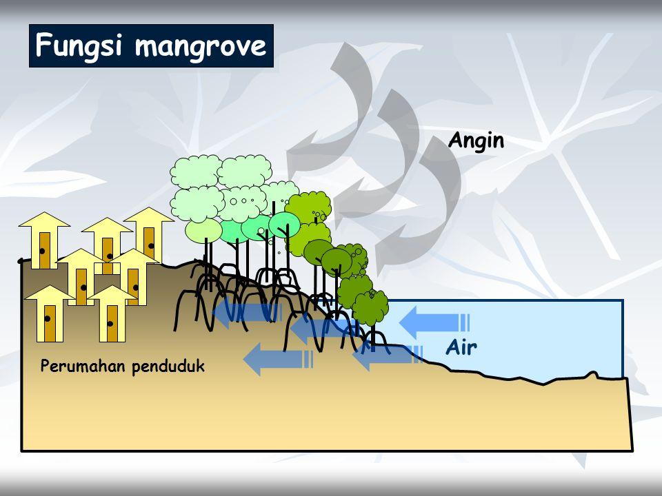 Air Fungsi mangrove Angin Perumahan penduduk