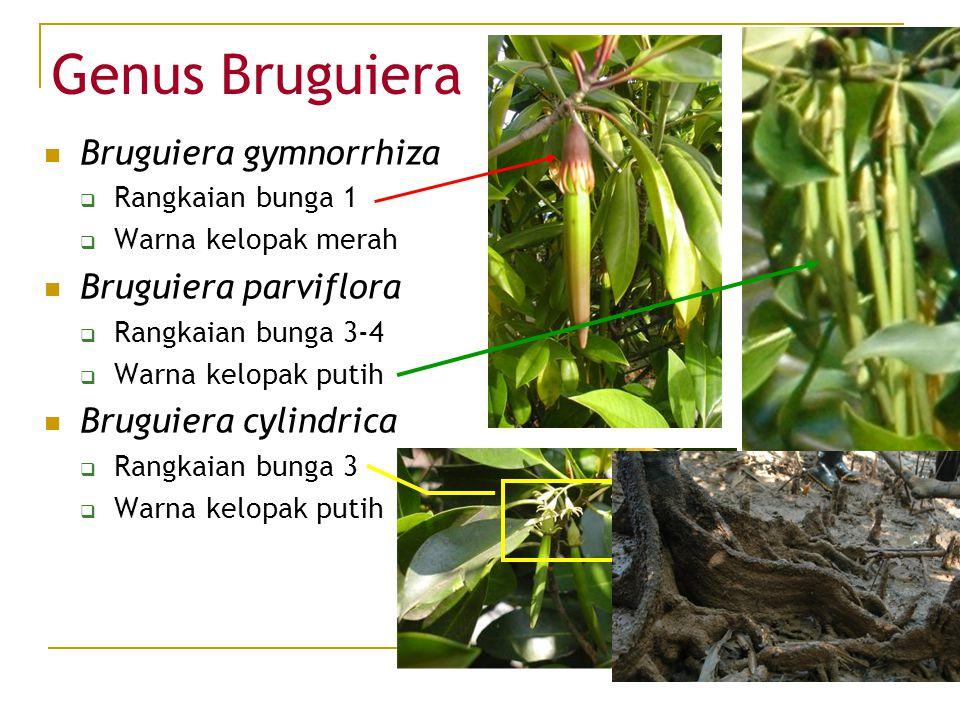 Genus Bruguiera Bruguiera gymnorrhiza  Rangkaian bunga 1  Warna kelopak merah Bruguiera parviflora  Rangkaian bunga 3-4  Warna kelopak putih Brugu