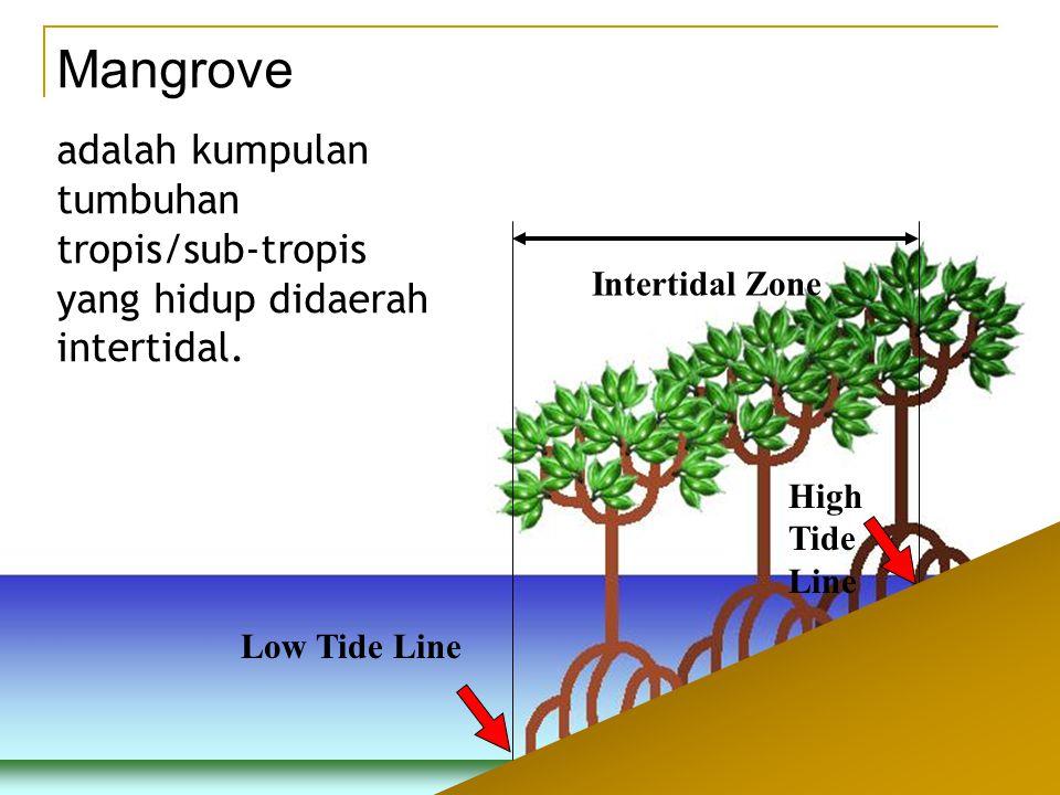 Low Tide Line High Tide Line Intertidal Zone Mangrove adalah kumpulan tumbuhan tropis/sub-tropis yang hidup didaerah intertidal.