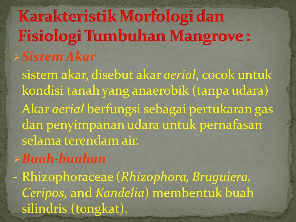  Sistem Akar sistem akar, disebut akar aerial, cocok untuk kondisi tanah yang anaerobik (tanpa udara) Akar aerial berfungsi sebagai pertukaran gas da