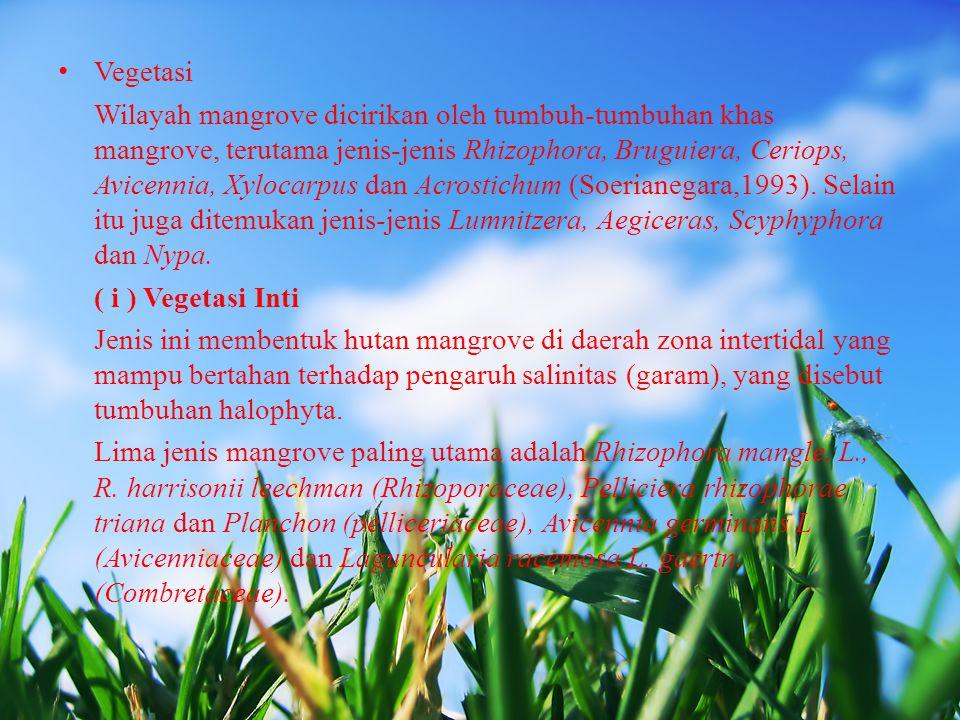 Vegetasi Wilayah mangrove dicirikan oleh tumbuh-tumbuhan khas mangrove, terutama jenis-jenis Rhizophora, Bruguiera, Ceriops, Avicennia, Xylocarpus dan