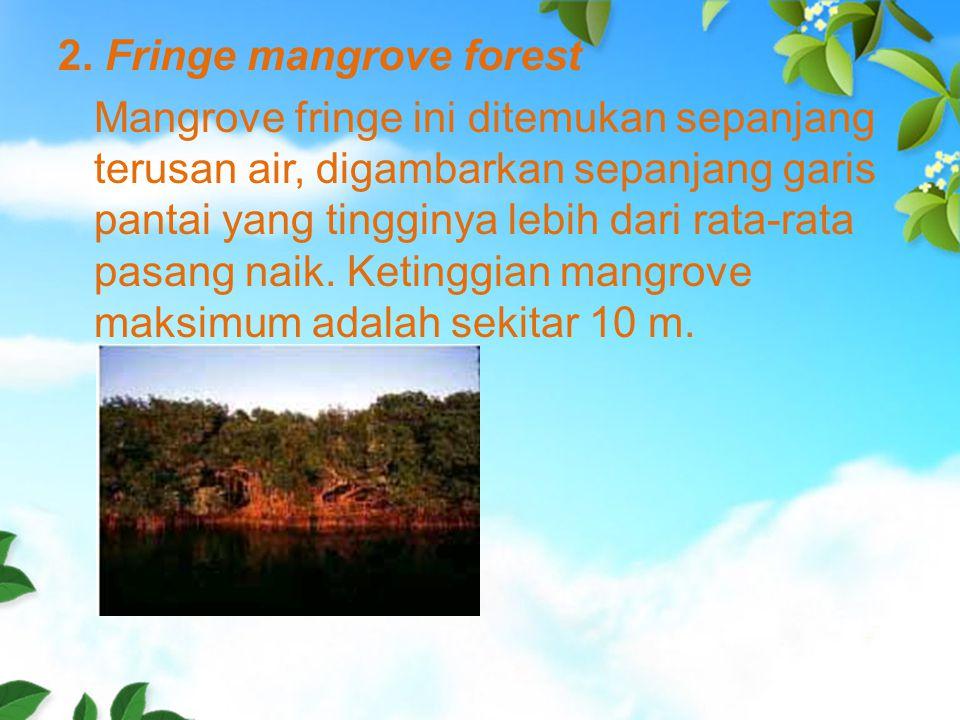 2. Fringe mangrove forest Mangrove fringe ini ditemukan sepanjang terusan air, digambarkan sepanjang garis pantai yang tingginya lebih dari rata-rata