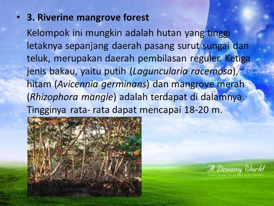 3. Riverine mangrove forest Kelompok ini mungkin adalah hutan yang tinggi letaknya sepanjang daerah pasang surut sungai dan teluk, merupakan daerah pe