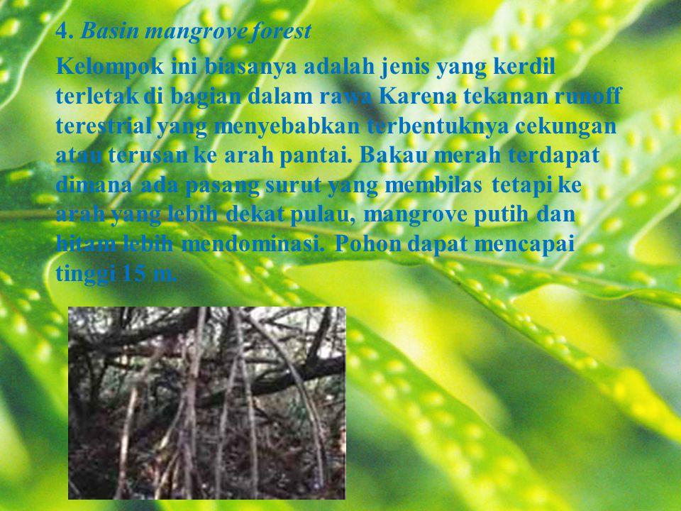 4. Basin mangrove forest Kelompok ini biasanya adalah jenis yang kerdil terletak di bagian dalam rawa Karena tekanan runoff terestrial yang menyebabka